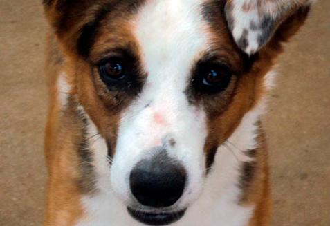 Bicharia – Crowdfunding para ajudar aos animais carentes