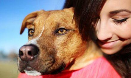 DogHero – Viaje tranquilo, encontre o melhor lar para seu cão