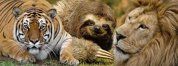 Campanha de santuário para animais bate recorde nacional de crowdfunding