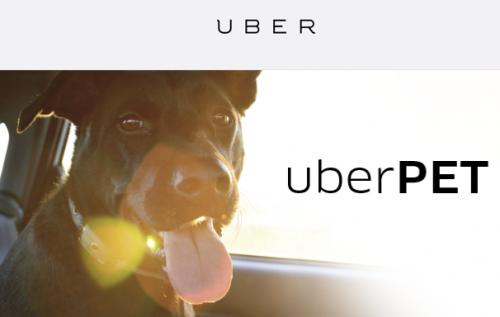 Uber Pet: Serviço de transporte de animais