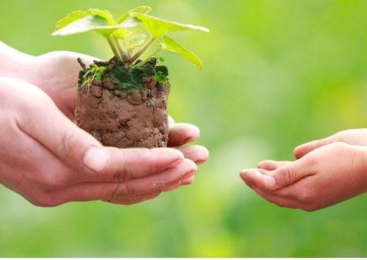 Doare – doações online para organizações do terceiro setor